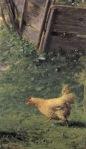 Ιακωβίδης Γεώργιος-Κότα στην αυλή
